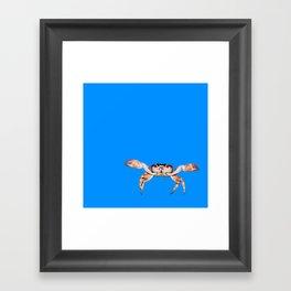Lonely Crab - Blue Framed Art Print