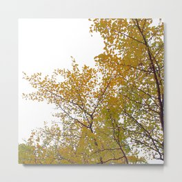 Ginko Trees Yellow and Green Metal Print