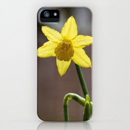 Daffodil II iPhone Case