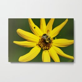 The Bumble and The Sunflower #1 Metal Print