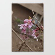 It's Spring Ya'll!! Canvas Print
