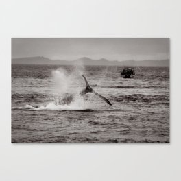 Whale Watching - Humpback Whale Canvas Print