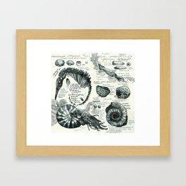 Sketchbook - Fossils Framed Art Print