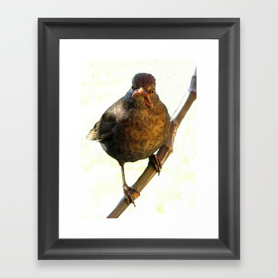 Female Blackbird (Turdus merula) Framed Art Print