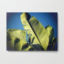 Banana Leaf Skies Metal Print