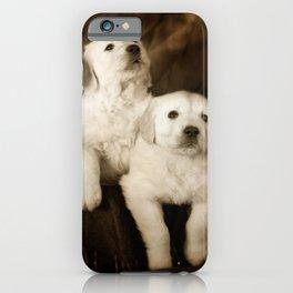 Cute labrador puppies iPhone Case