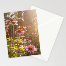 Sun setting on purple coneflower garden with bee on flower Stationery Cards