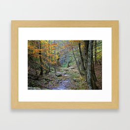 The forest in autumn time in Calabria Italy Framed Art Print