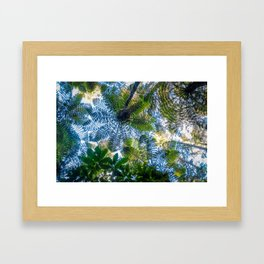 Giant ferns in redwood forest, Rotorua, New Zealand Framed Art Print