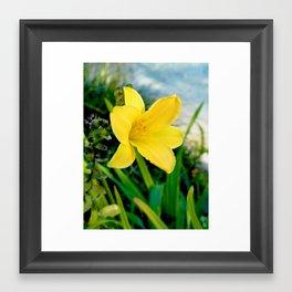 Vibrant Lily Framed Art Print