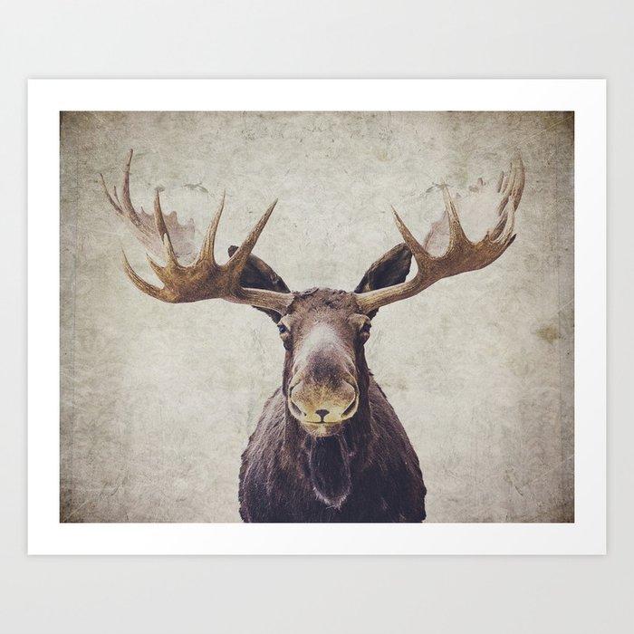 Moose Kunstdrucke