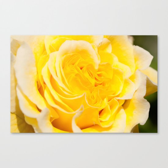 A Touch of Yellow #Rose #1 #art #society6 Canvas Print