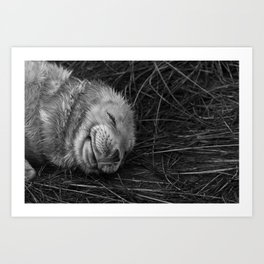 Snoozing Seal Pup Art Print