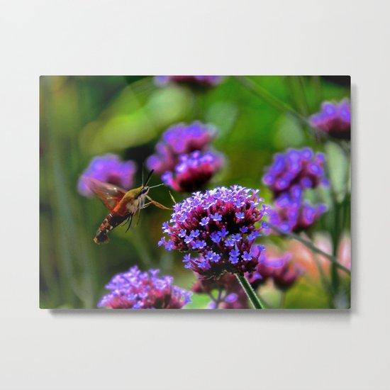 The Hummingbird Moth Metal Print