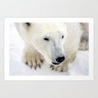 polar bear Art Prints featuring Polar Bear by MVision Photography