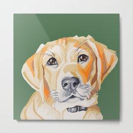 A portrait of Brandi the Sweet Yellow Lab Puppy Metal Print
