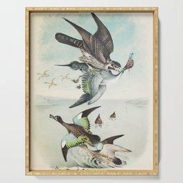 Plate VI Ornithology Birds Vintage Studies Duck, Falcon, Hawk, Teal American Bird Serving Tray