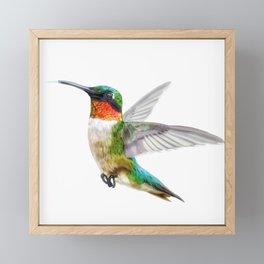 Humming Bird Framed Mini Art Print