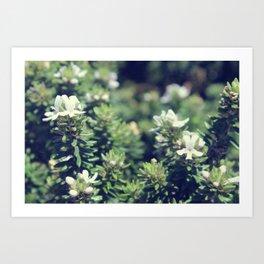 South Head Flowers Art Print