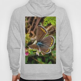 Common Blue Butterfly Polyommatus Icarus Hoody