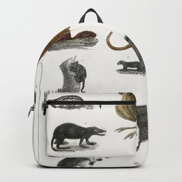 Collection of animals in the canine and feline family from A history of the earth and animated natur Backpack