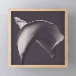 Calla lily photo, fine art, flowers photography, flower still life, wall decor, Robert Mapplethorpe Framed Mini Art Print