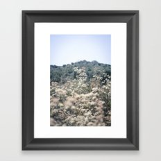 Buckwheat Afternoon Framed Art Print