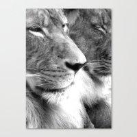 lions Canvas Prints featuring Lions by Elizabeth Dillinger