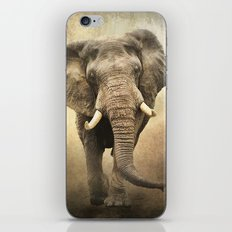 African Beauty iPhone & iPod Skin