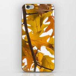 Golden oak leaves iPhone Skin