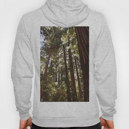 Redwood Forest XII Hoody