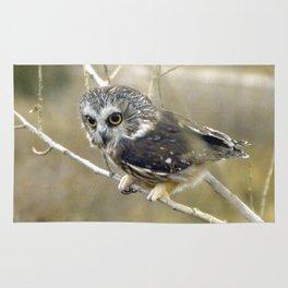Northern Saw Whet Owl Rug