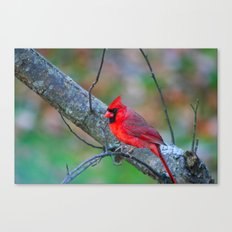 Bright Red Cardinal Canvas Print