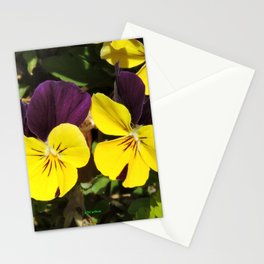 The Pansies at the Corner Stationery Cards