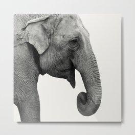 Elephant Animal Photography Metal Print
