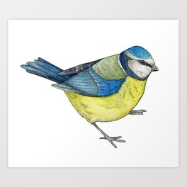 Blue Tit Illustration Art Print