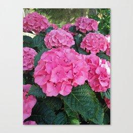 Pink hydrangea garden Canvas Print