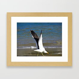 Jeffy Seagull Framed Art Print