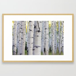 Colorado Aspen Grove Framed Art Print