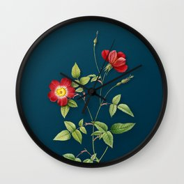 Vintage Indica Stelligera Rose Botanical Illustration on Teal Wall Clock