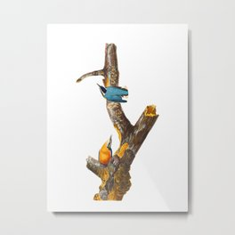 Red-breasted Nuthatch Bird Metal Print