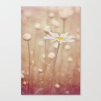 daisies Canvas Prints featuring Daisies by KunstFabrik_StaticMovement Manu Jobst