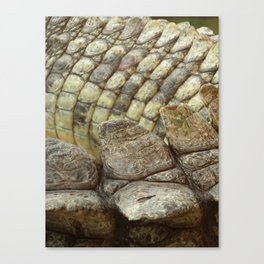 living fossil Canvas Print