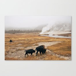 Mother Bison and Calf in Yellowstone National Park Canvas Print