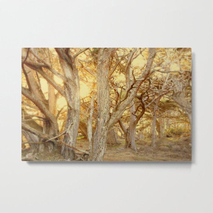 enchanting forest Metal Print