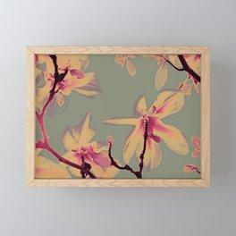 Apricot Magnolias on grey ground Framed Mini Art Print