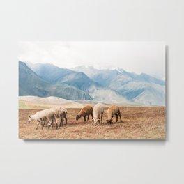 Peruvian Wool Metal Print