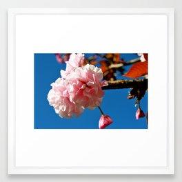 Pink Flowers III Framed Art Print