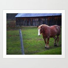 Horse Color Art Print