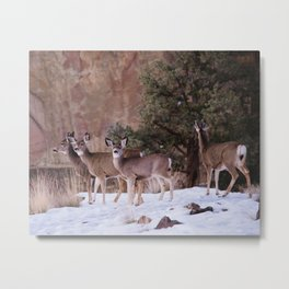 deer at smith rock Metal Print